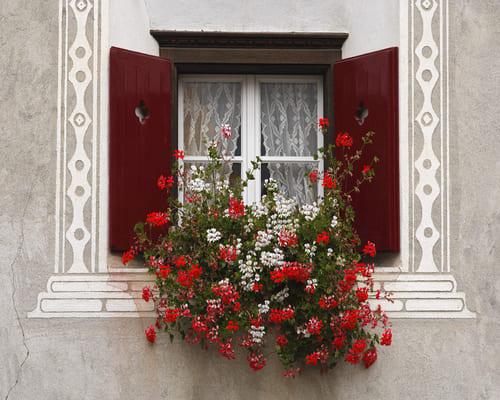 Koka logu izgatavošana no priedes vai sarkankoka